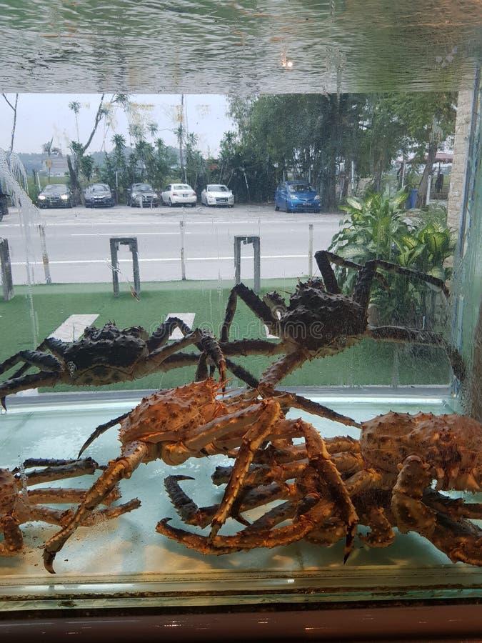 Crabby Crabby fotos de stock royalty free