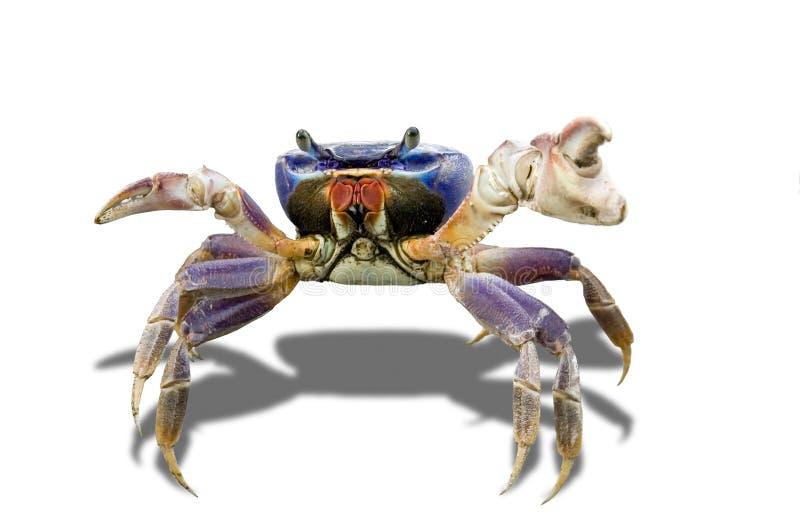 crabby stock illustrationer