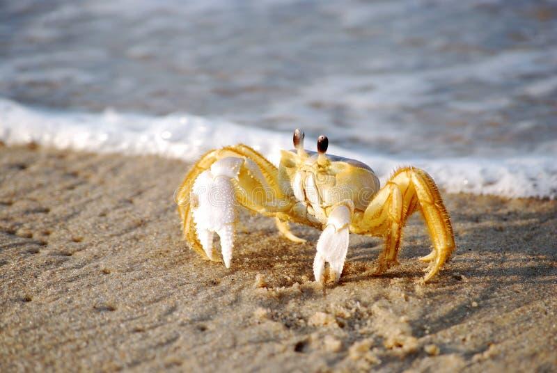 Crabby imagens de stock