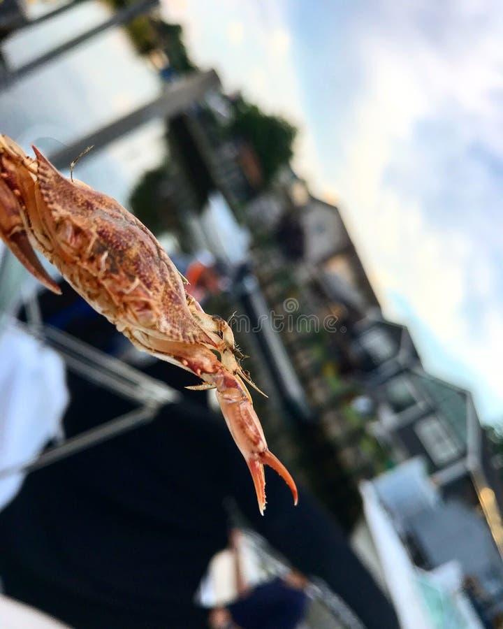 crabby imagem de stock royalty free