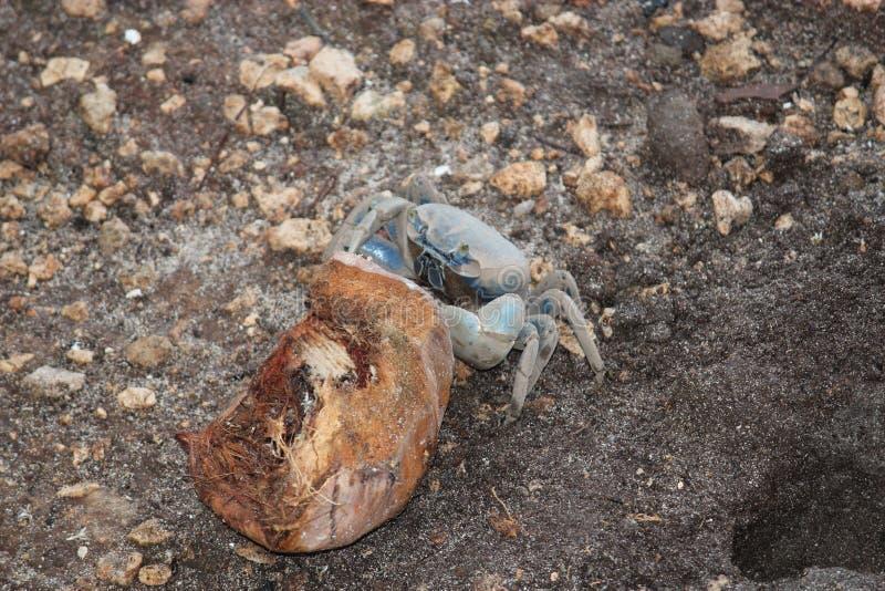 Crabby flåsanden royaltyfri bild