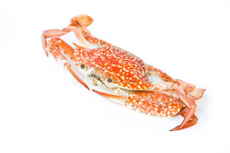Crabe bleu. images libres de droits
