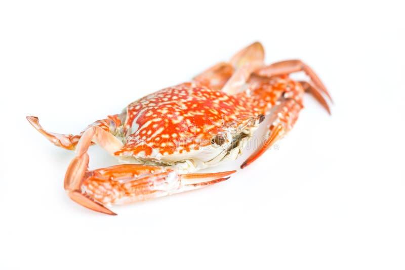 Crabe bleu. photographie stock libre de droits