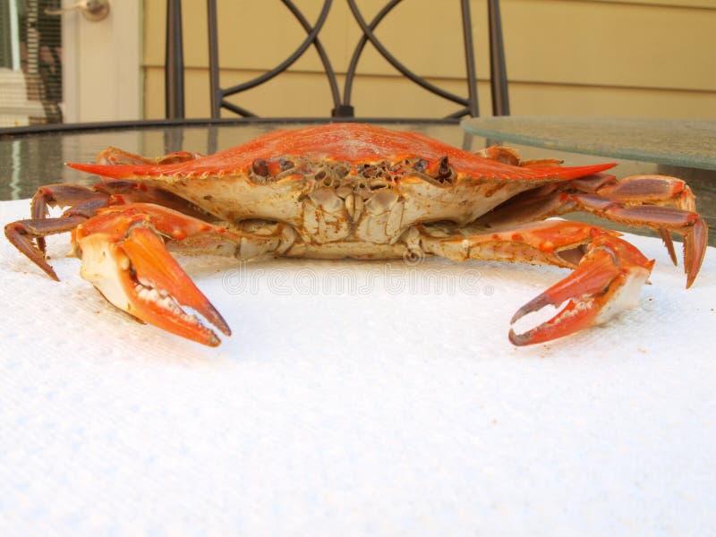 Crabe bleu cuit sur la serviette de papier photo libre de droits