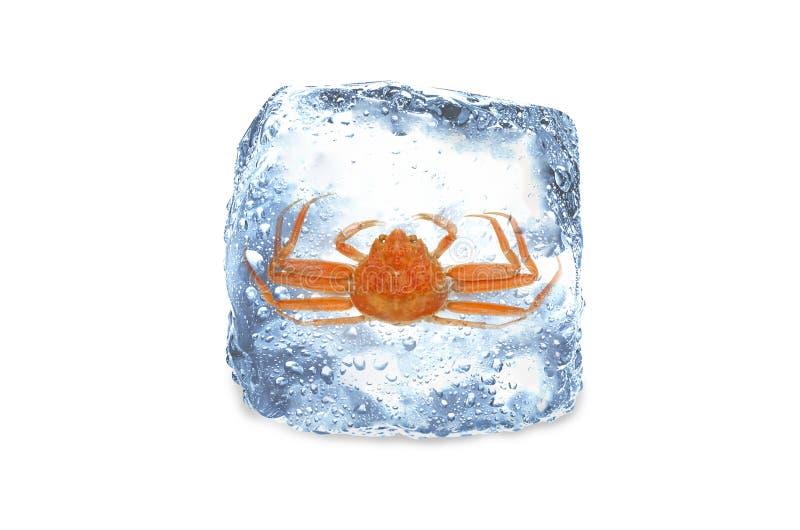 Crabe congelé, glace images libres de droits