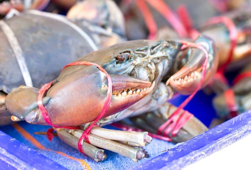 Crabe cru. photo libre de droits