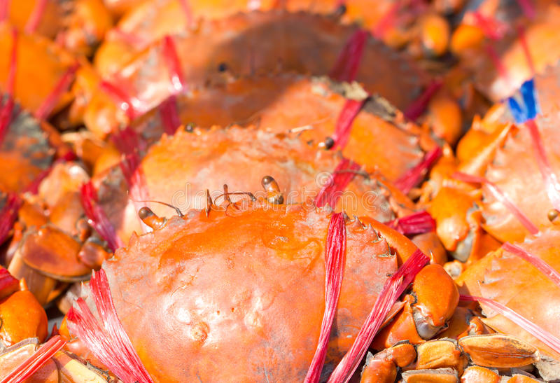 Crabe cuit. photo libre de droits