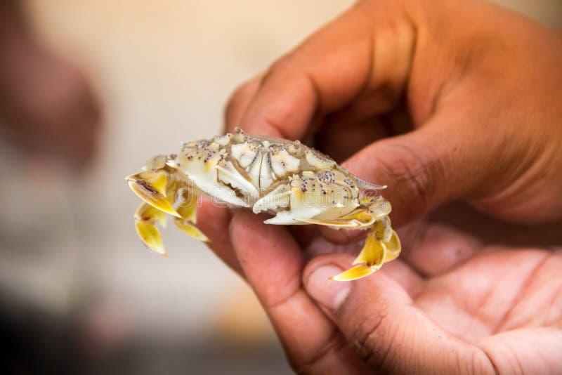 Crabe dans la main du ` s de pêcheur images stock