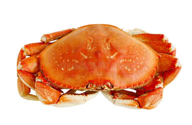 Crabe de Dungeness image libre de droits