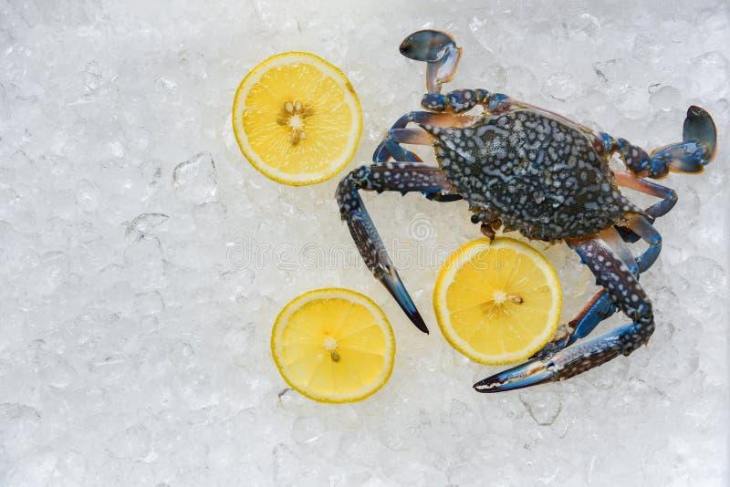 Crabe de fruits de mer sur le fond de glace/crabes de natation frais et l'océan bleus de citron gastronome sur la glace photographie stock