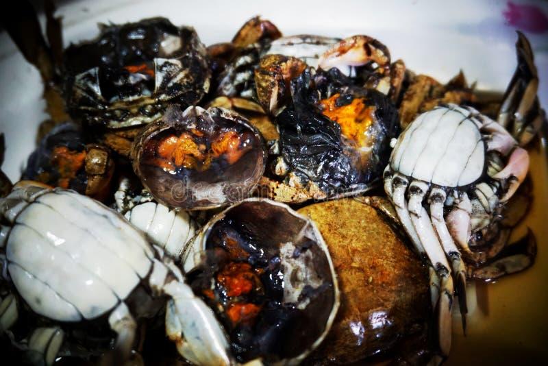 Crabe de mar?e vert image libre de droits