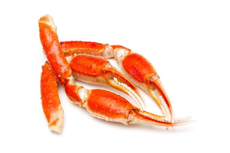 Crabe de neige (opilio de Chionoecetes) ou crabe de Tanner photos stock