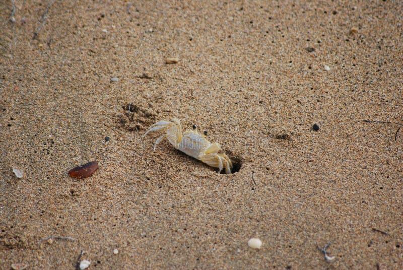 Crabe de Samll image stock