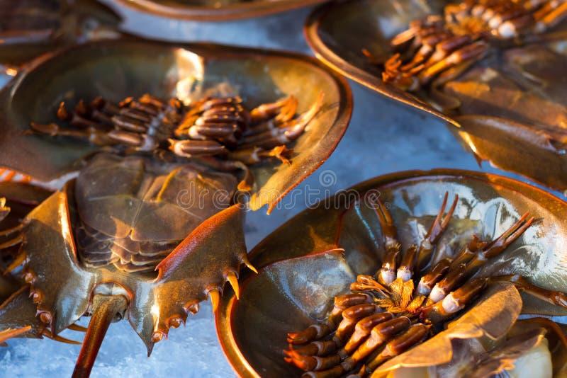 Crabe en fer à cheval frais sur la glace à vendre au marché local dans Sattahip, Thaïlande images stock