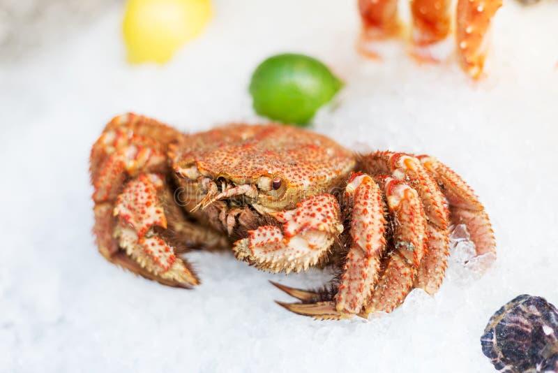 Crabe entier sur la glace au marché photographie stock