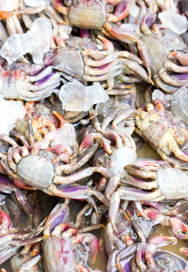 Crabe frais. images libres de droits