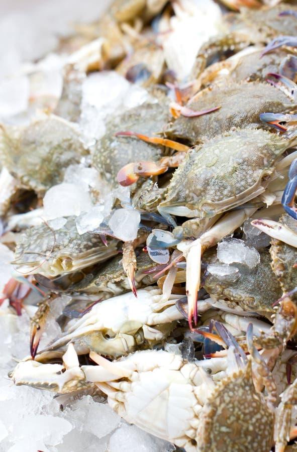 Crabe frais. photo libre de droits