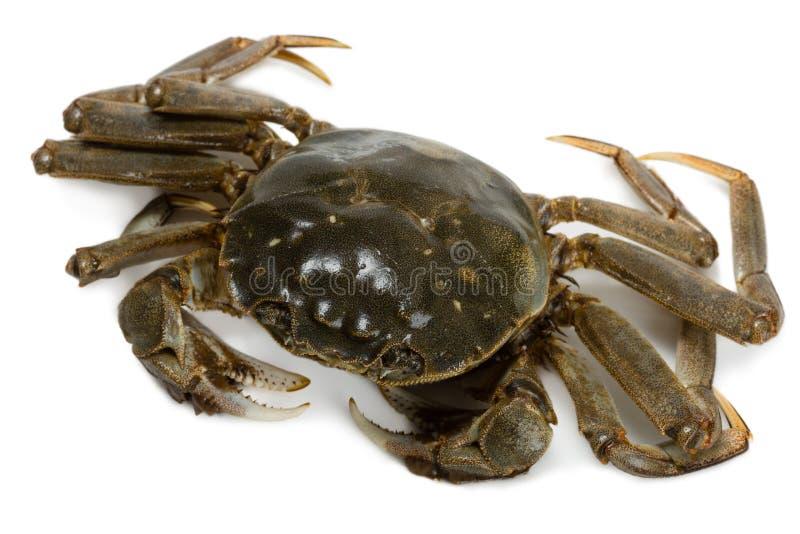 Crabe frais images stock
