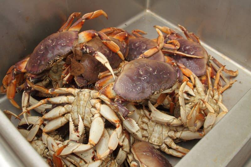 Crabe frais photo stock