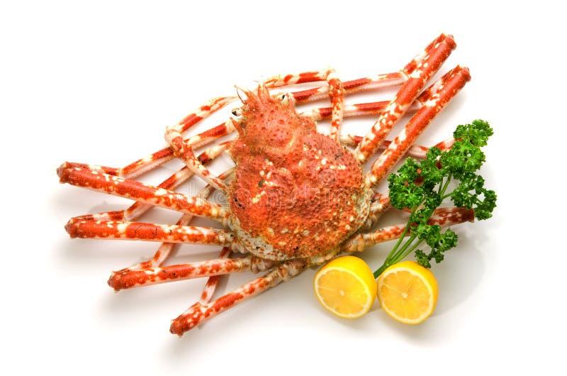 Crabe géant photo libre de droits