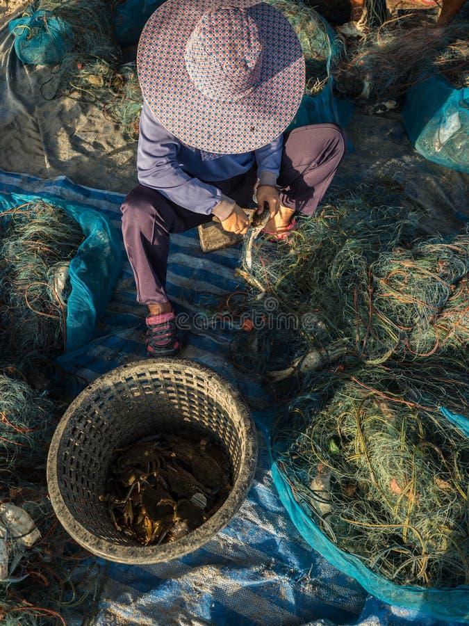 Crabe retirant des filets images stock