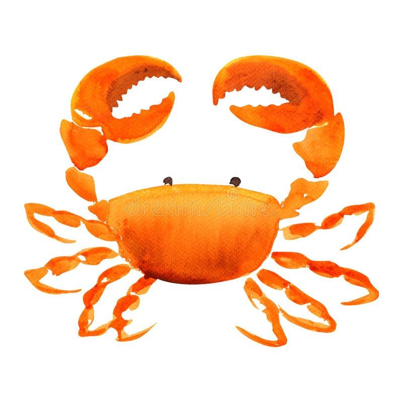 Crabe rouge, fruits de mer frais, nourriture de mollusques et crustacés, vue d'isolement et supérieure, illustration tirée par la images stock