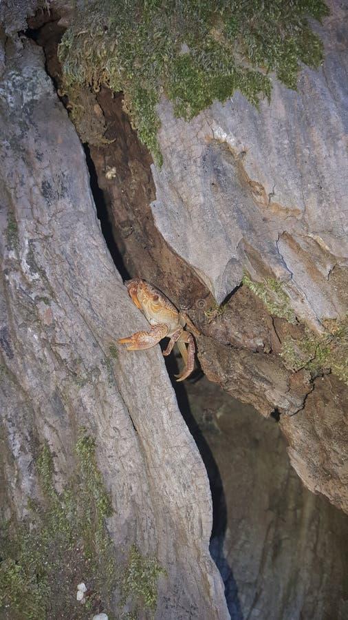 Crabe sur l'arbre images stock