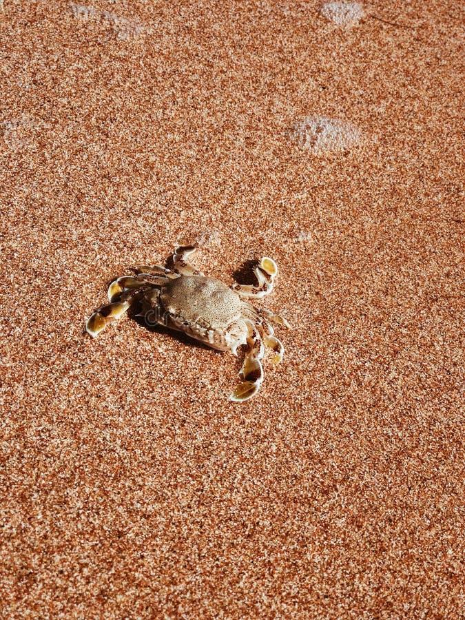 Crabe sur la c?te photographie stock libre de droits