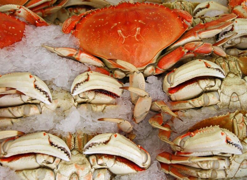 Crabe sur la glace photographie stock