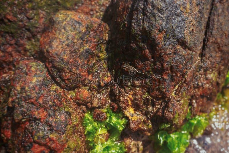 Crabe sur la pierre Près de l'océan, mer photographie stock