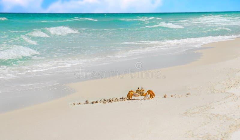 Crabe sur la plage tropicale image stock