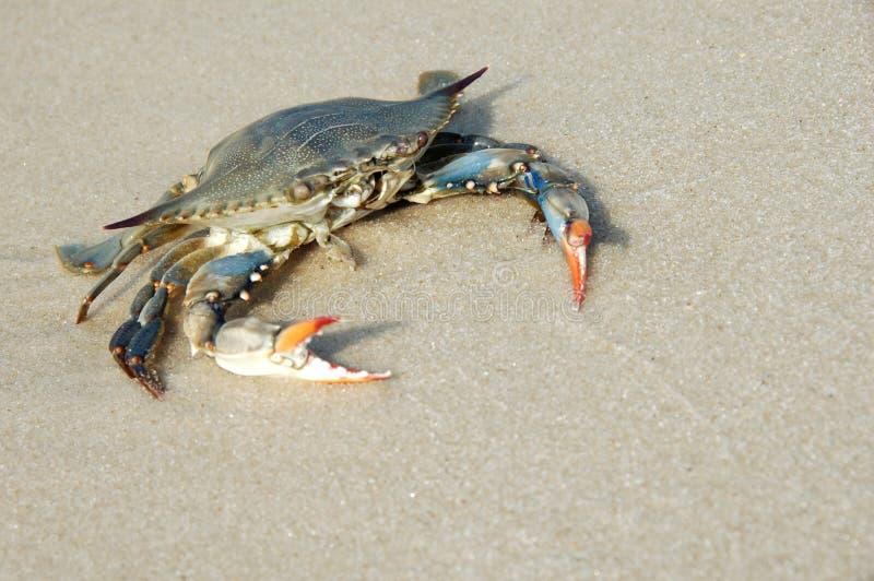 Crabe sur le rivage photos stock