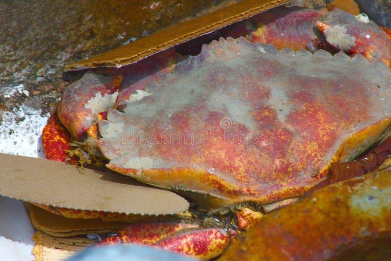 Crabe sur un pilier photo stock