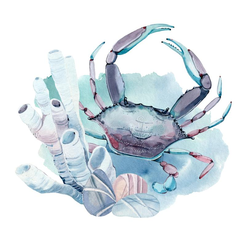 Crabe tiré par la main d'aquarelle illustration libre de droits