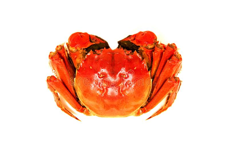 Crabe velu chinois cuit d'isolement sur le blanc photo stock