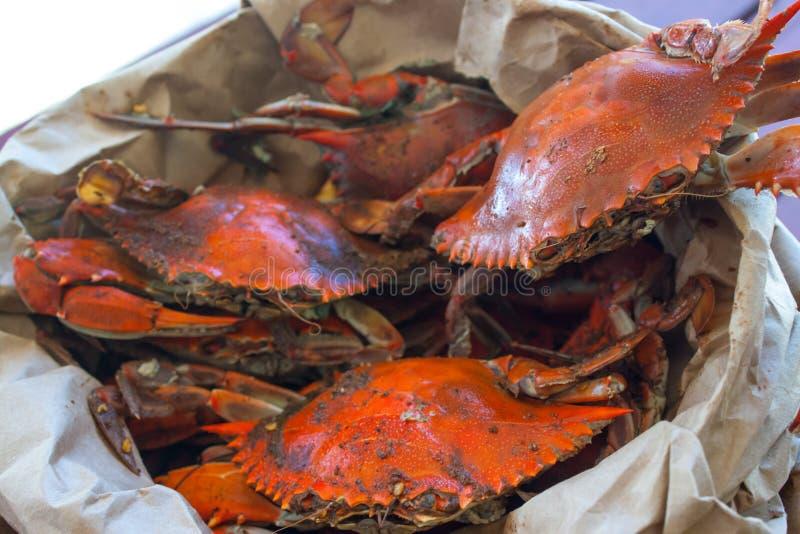 Crabes bleus cuits à la vapeur de la baie de chesapeake images libres de droits