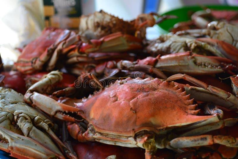 Crabes bouillis photos stock
