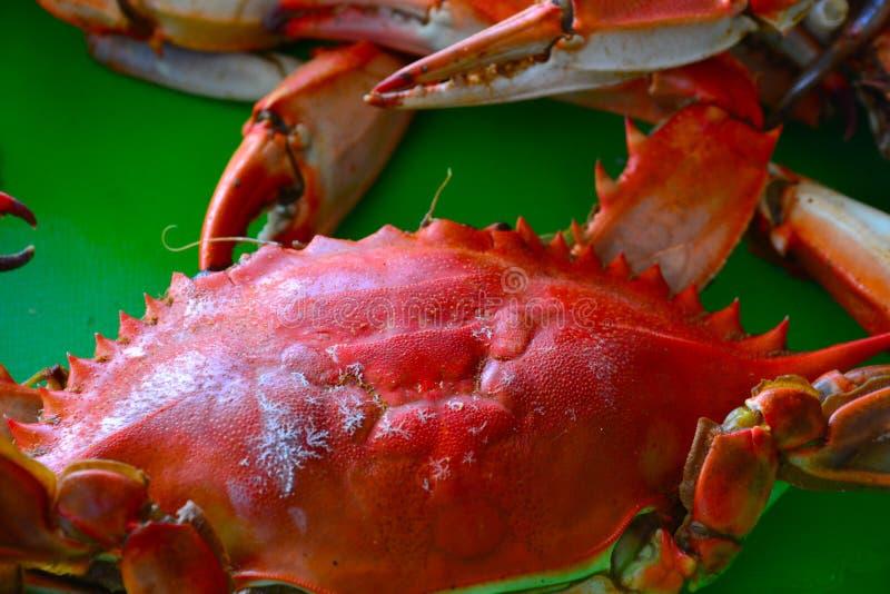 Crabes bouillis image libre de droits