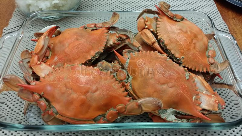 Crabes cuits photographie stock