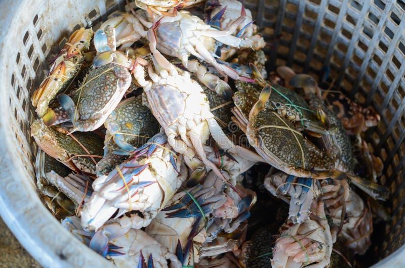 Crabes de natation bleus frais dans un panier image stock