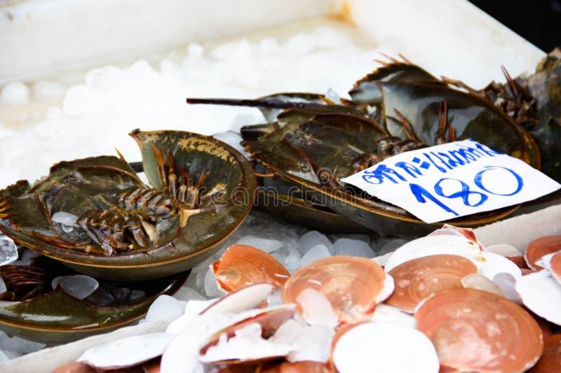 Crabes en fer à cheval photo libre de droits
