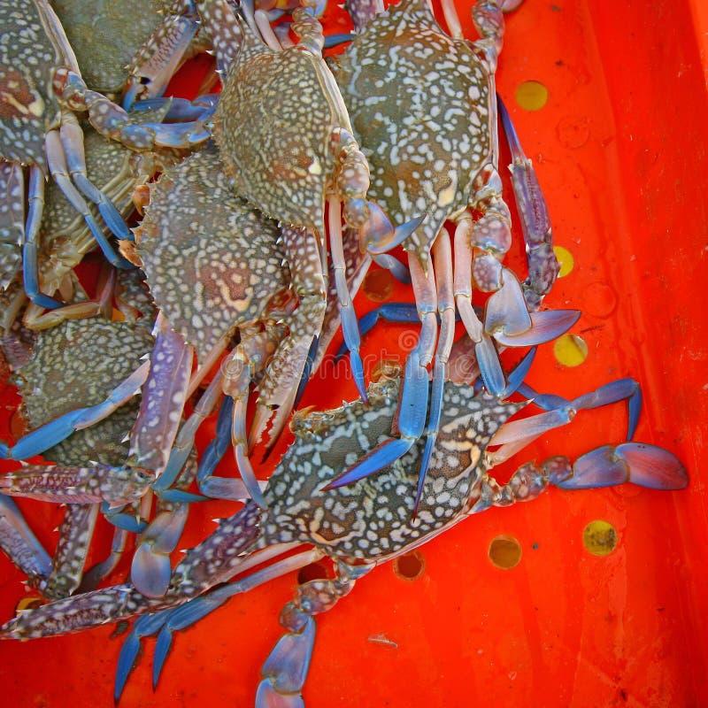 Crabes frais dans le seau image stock