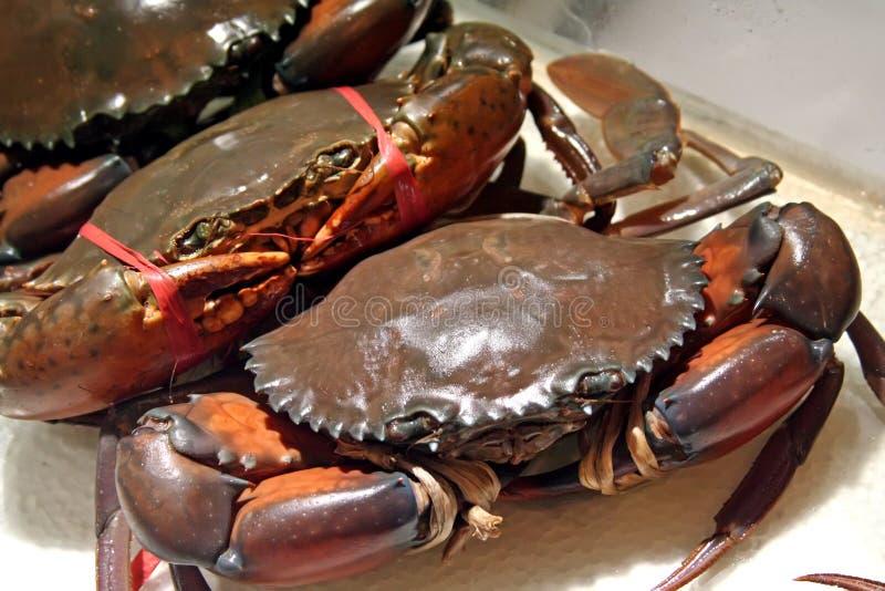 Crabes sous tension images libres de droits