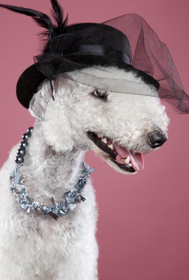 Crabot à la mode dans le chapeau de dame images stock