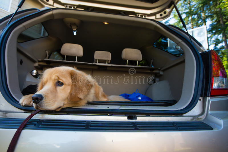 Crabot attendant un voyage par la route photos libres de droits