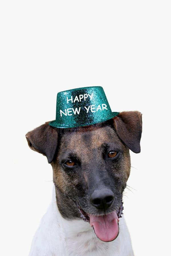 Crabot avec le chapeau de bonne année image stock
