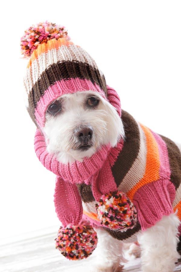Crabot chaud s'usant le beanie et le cavalier tricotés photos libres de droits