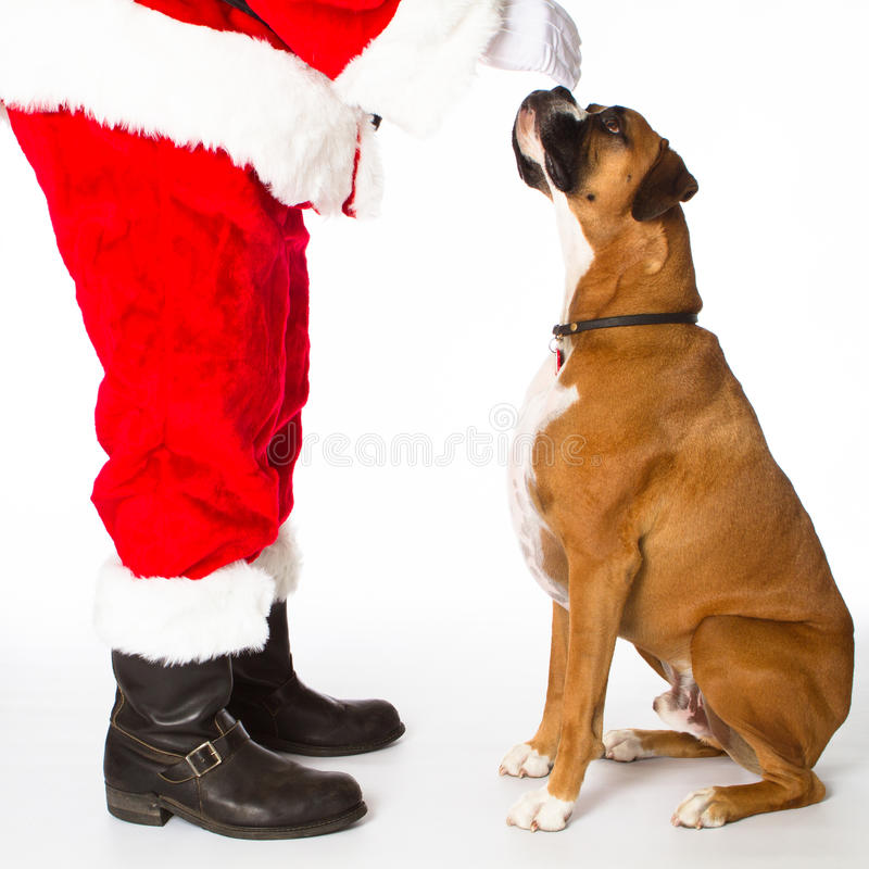 Crabot de boxeur avec Santa photo stock