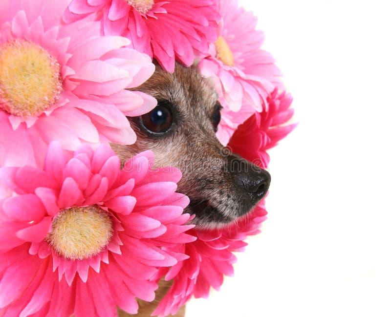 Crabot de fleur image libre de droits
