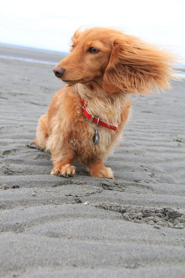 Crabot de plage photographie stock